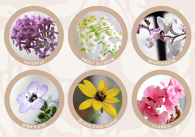 Wildflower-seed-paper-blend-sm